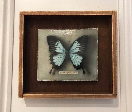 Dan Morley | Blue Mountain Swallow Tail