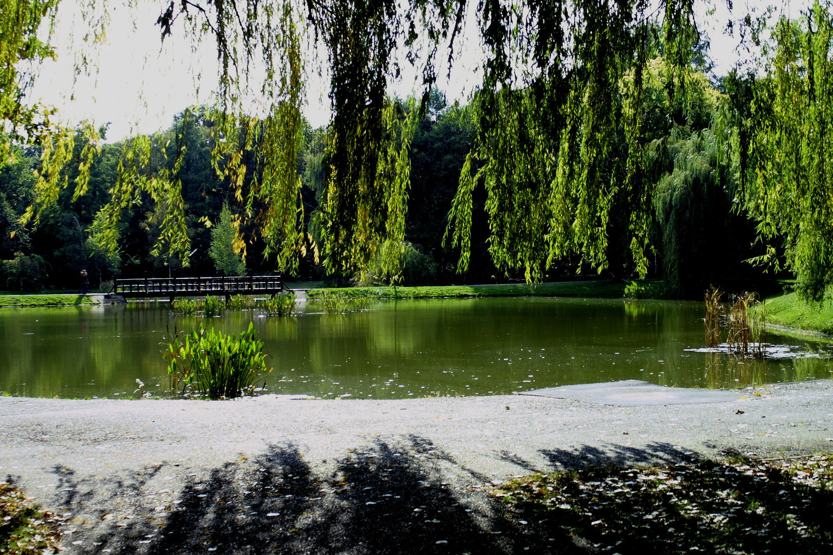 """Big Forest"" Nature Conservation Area - Debrecen, Hungary"
