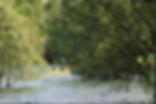 canoe dans les arbres.PNG