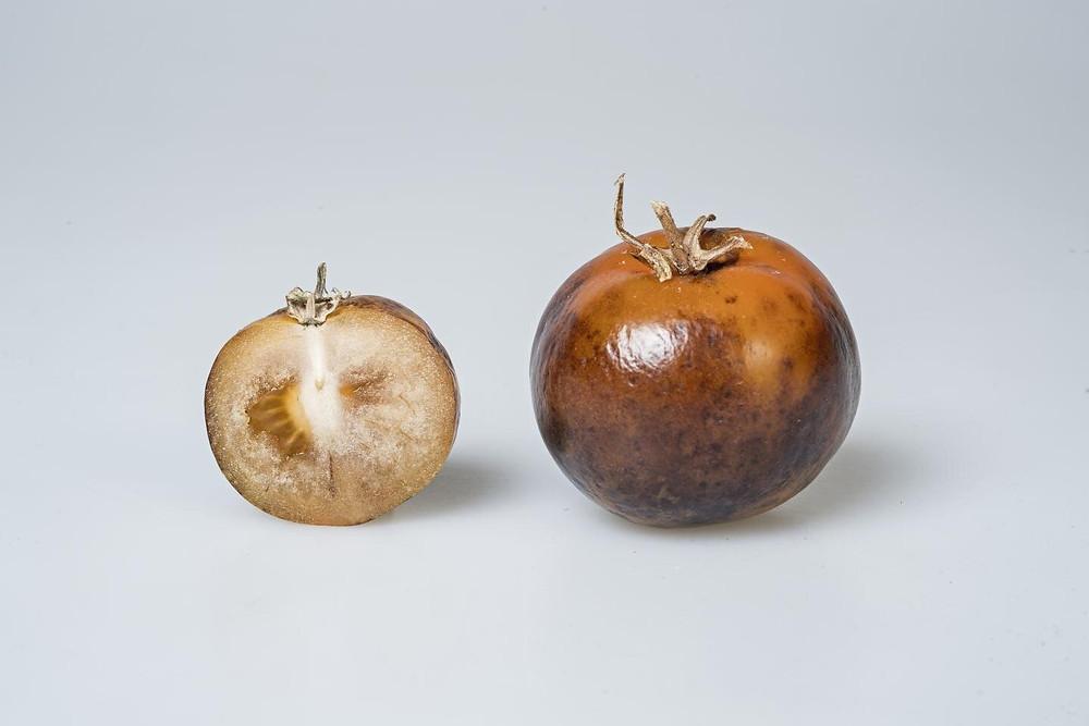 https://www.jic.ac.uk/press-release/tomatoes-offer-affordable-source-of-parkinsons-disease-drug/