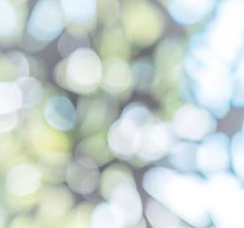 Dappled light square.jpg