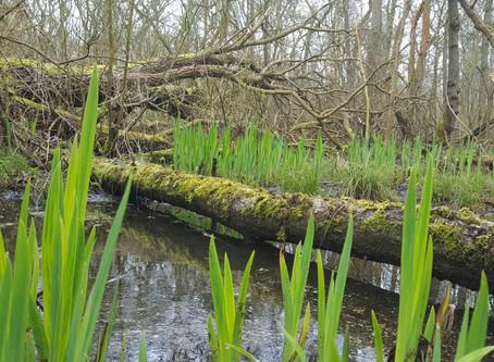 Marsh harriers and kingfishers