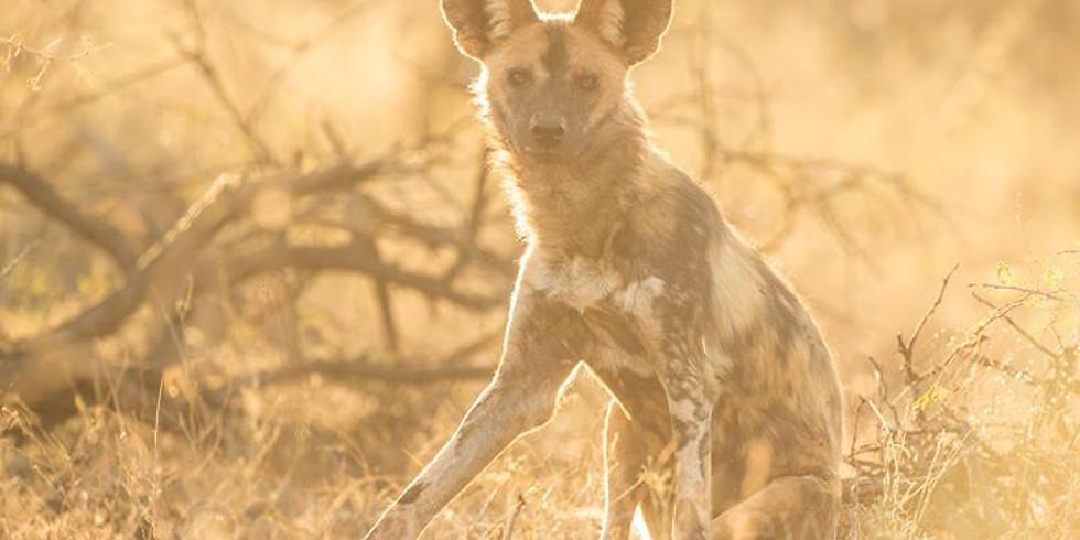 Zimanga Safari