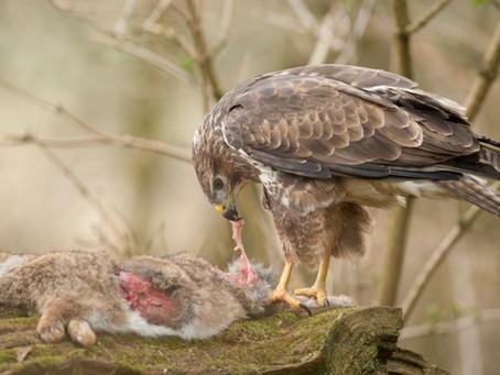 Bird of prey photography workshop