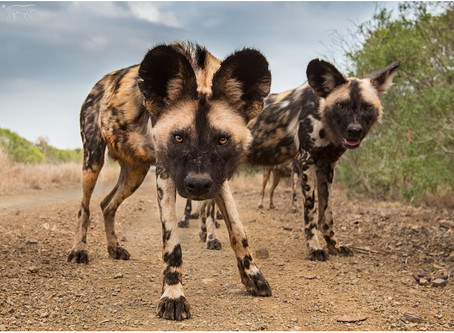 An Africa photography safari, with a difference