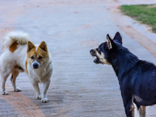 The Risk of an Off-Leash Dog