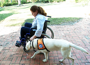Empower Assistance Dogs - Assistane Dog Working