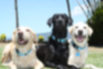 Electric Ant Detection Dogs