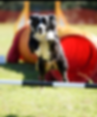 Dog Jumping Pole - Agility