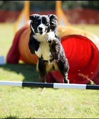 Dog Jumping Pole - Agility
