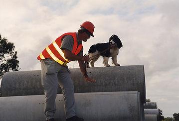 Disaster Dog Cinder Working
