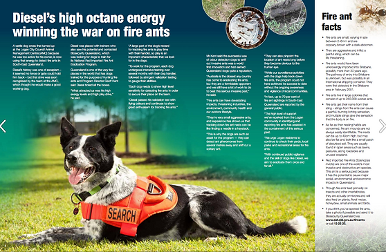 Diesel - Fire Ant Detection Dog