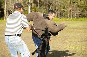 Patrol Dog