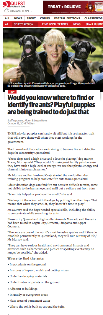 Puppies being trained to be Fire Ant Detection Dog Article