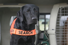 Fire Ant Detection Dog QLD