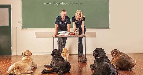 Craig A. Murray Dog Training