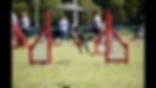 Dog Jumping - Agility - Craig A Murray