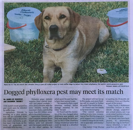 DOgged Phylloxera pest may meet its match