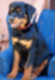 Juvenile Puppy