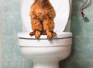 Tips for Toilet Training your Puppy