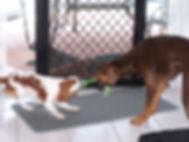 Dog's Tug-o-war