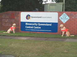 Fire Ant Detection Dogs for Biosecurity QLD