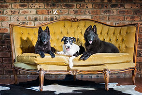 Dog Image  - Craig A. Murray