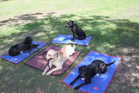 Fire Ant Detection Dog Team