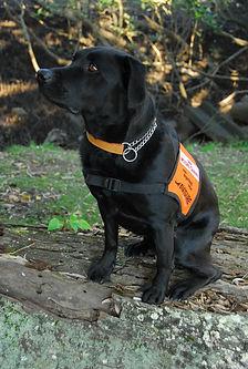 Joe - Bird Strike Dispersal Dog