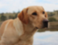 Glory - Sniffer Dog - Craig A. Murray