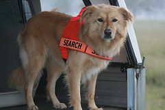 Fire Ant Detection Dog