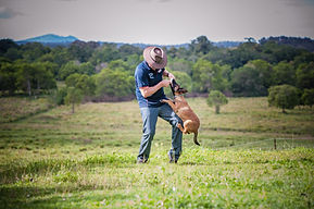 Craig working Patrol Dog