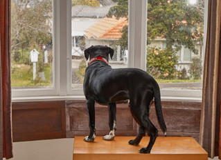 Does your dog have separation anxiety ?