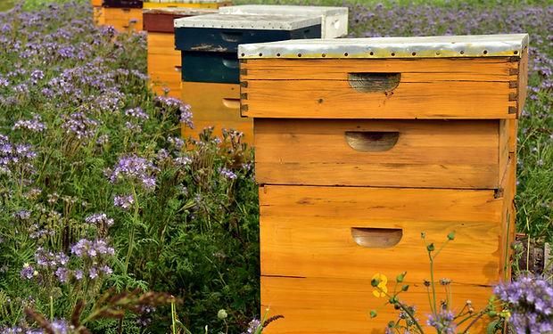 beehive-3703426.jpg
