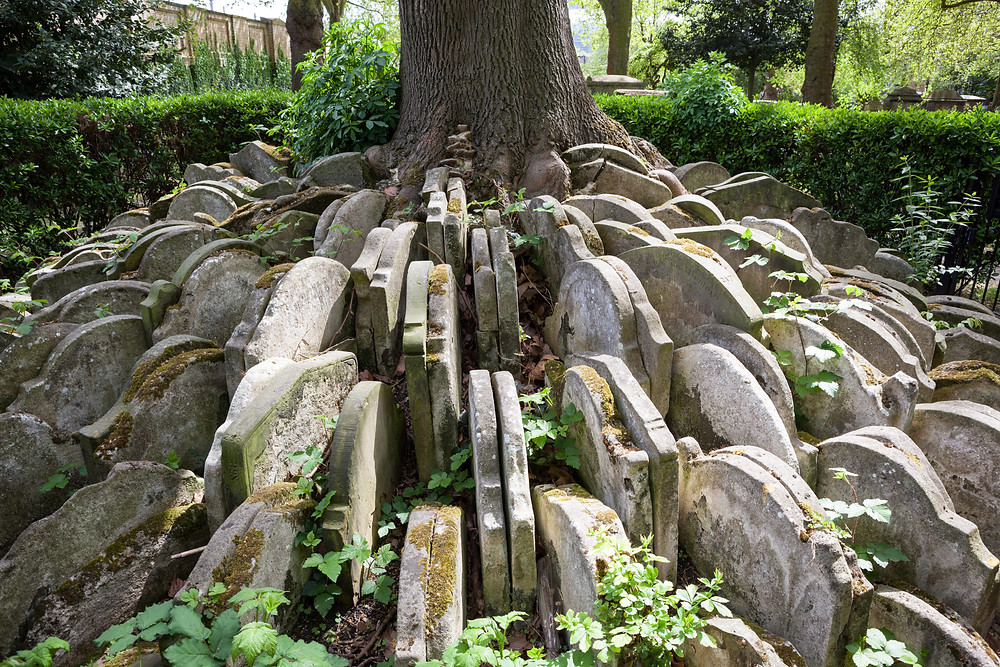 The Hardy Tree at St Pancras Old Church, London Thomas Hardy novelist poet architect surprising facts