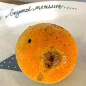 Perfect Fruit
