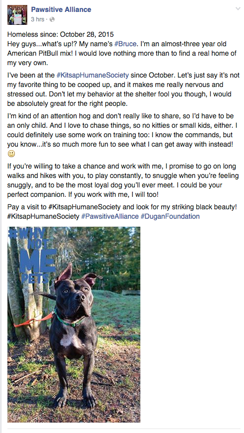 A Facebook post for an adoptable pet