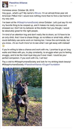 A Facebook post for an adoptable pet