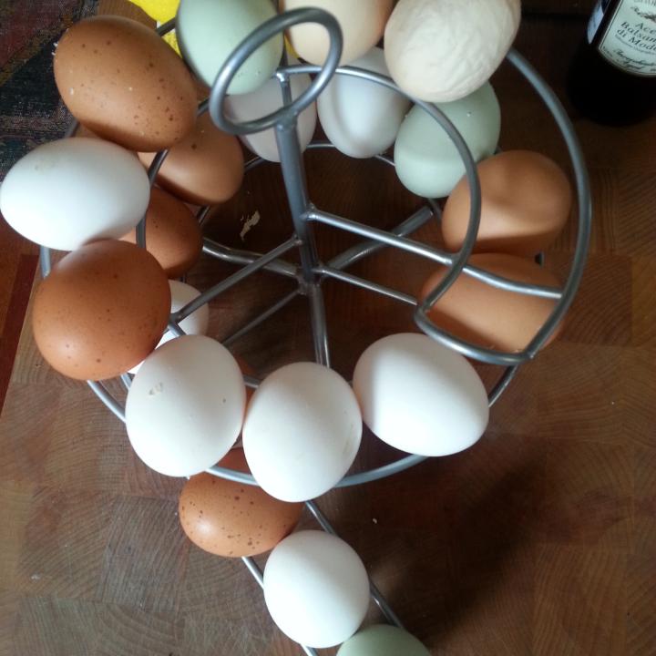 Egg Roller Coaster