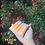 Thumbnail: Peach Pie Lip Jelly