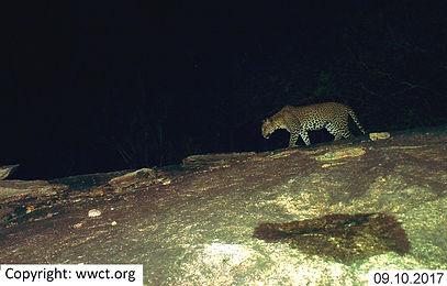 09102017_190727_leopard1.JPG