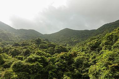 170812 Forest Walk Tai O-4.jpg