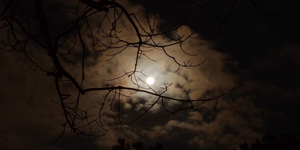 Full Moon Forest Bathing Guided Walk