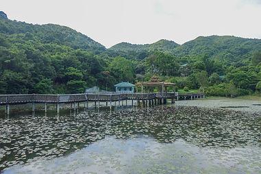 170812 Forest Walk Tai O-37.jpg