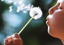 child-boy-blowing-dandelion-plant-1080P-wallpaper-middle-size.jpg
