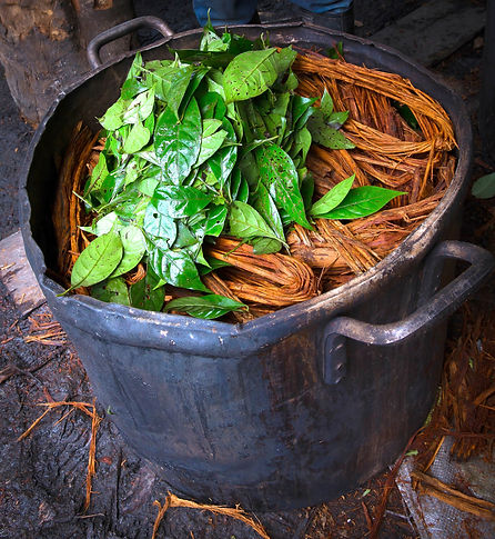 shamanism, ayahuasca preparation, jungle, Shipibo