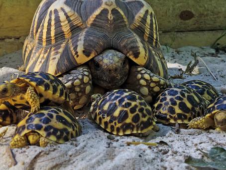 Mother Turtle Appreciation