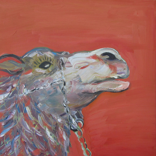 Camel2_40x40_12.jpg