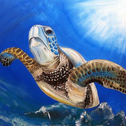 Turtle Ruedi_65x50_13.jpg