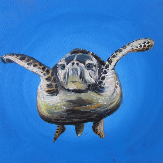 Turtle2_30x24_12.jpg